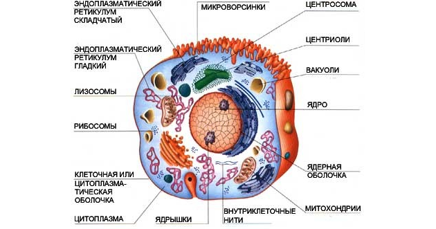 картинки живая клетка